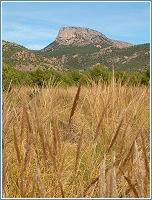 El Morrón de Totana (Sierra Espuña) visto desde el espartal del Llano de las Cabras (Aledo)