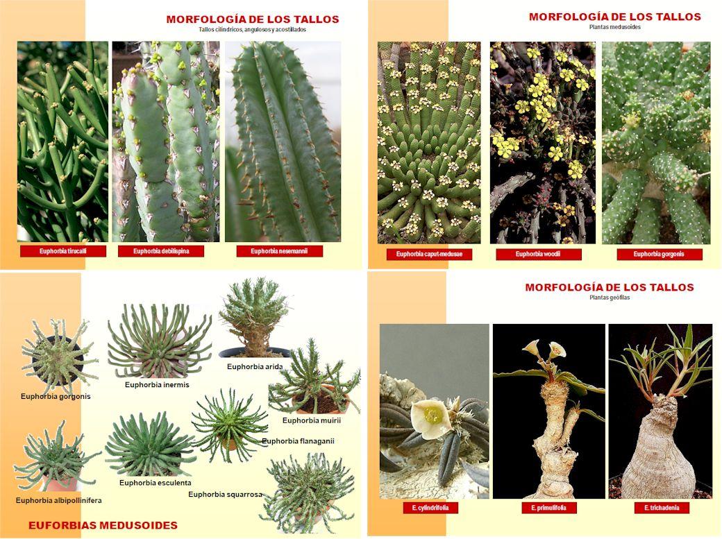 Asociaci n murciana de amigos de las plantas - Lista nombre arbustos ...