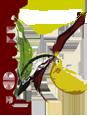 Grupo de Estudio y Conservación de Orquídeas (GECOR)