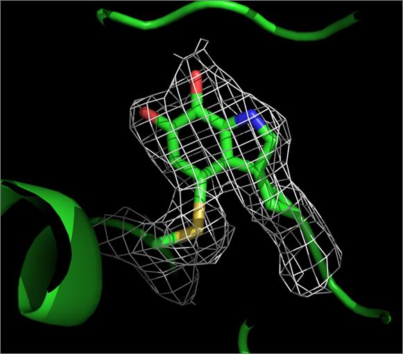 Biotecnología Microbiana Umu