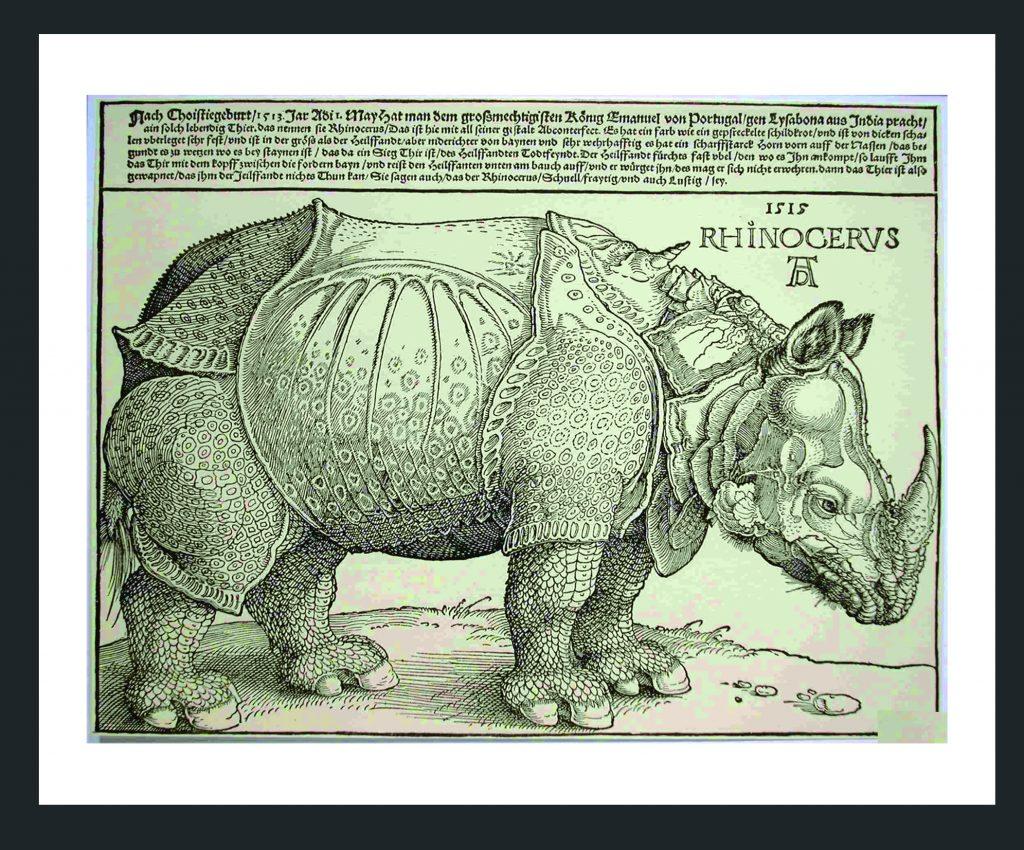 Rinoceronte indio. Grabado antiguo. Autor desconocido.