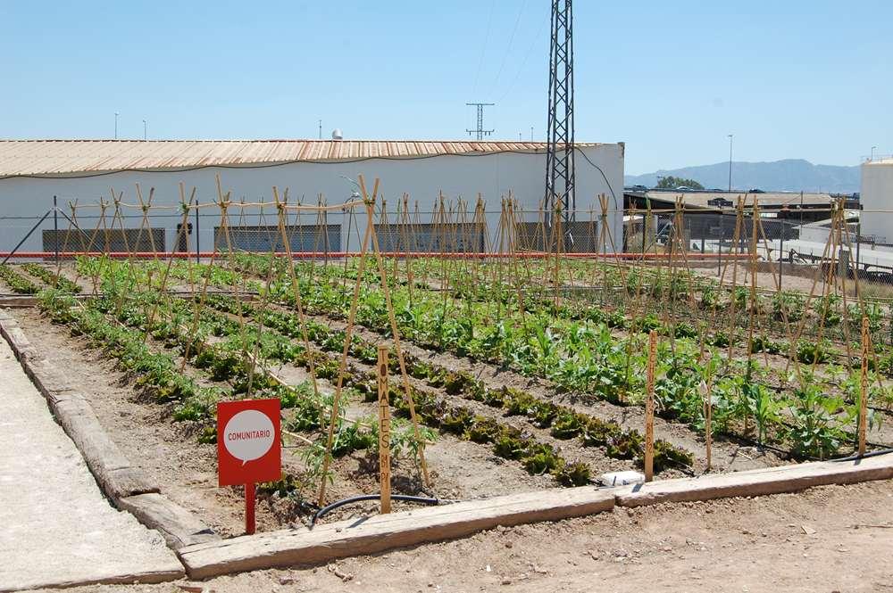 Huertos Eco Campus. Campus Sostenible. Universidad de Murcia