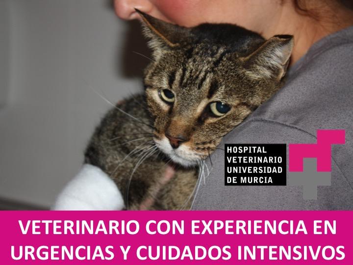 Oferta de trabajo para veterinarios del Hospital Veterinario UMU en el servicio de hospitalización de pequeños animales
