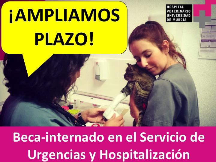 Beca-internado para veterinarios en el servicio de hospitalización del hospital veterinario UMU