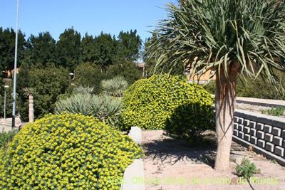 Jardines de la universidad de murcia jard n canario for El jardin canario