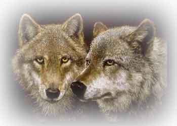 fusion disney y disney2 Lobos