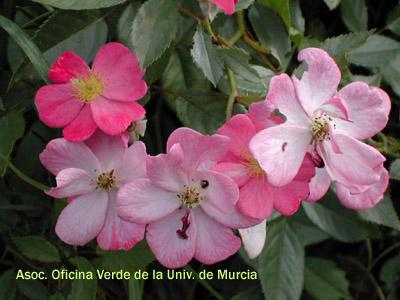 Jardin de rosas del mundo jardines de la universidad de for Cancion jardin de rosas