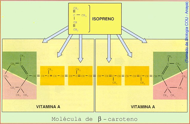 caroteno.jpg (54307 bytes)