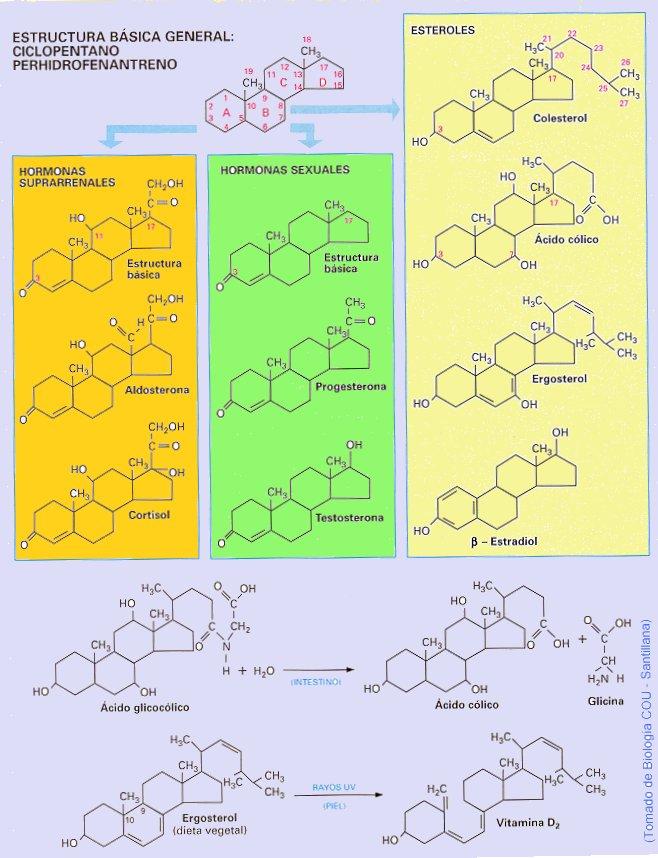 esteroides intraarticulares pdf