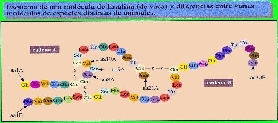 fig5a.jpg (34695 bytes)