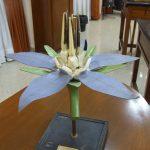 Modelo de la flor de la borraja.