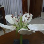 Modelo de la flor del peral.