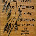 Les fleurs des prairies et de pâturages.