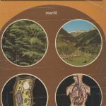 Ciencias Naturales. 3.º BUP