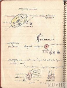 Figura 8.2. Cuaderno del alumno (sin año)